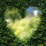 Piękny ,a także porządny zieleniec to zasługa wielu godzin spędzonych  w jego zaciszu w toku pielegnacji.
